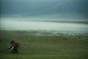 An African Elephant In The Ngorongoro Print by Chris Johns