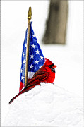 Photos Of Birds Posters - An American Bird  Poster by Randall Branham