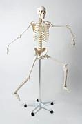 An Anatomical Skeleton Model Running And Jumping Print by Rachel de Joode