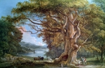 Woodland Painting Framed Prints - An Ancient Beech Tree Framed Print by Paul Sandby