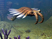 Natural Ocean Life Framed Prints - An Anomalocaris Explores A Middle Framed Print by Walter Myers