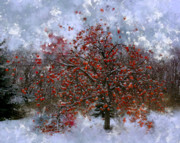 Snow Scene Art - An Apple of a Day by Julie Lueders