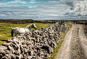 Aran Islands Framed Prints - An Aran Horse Framed Print by Natasha Bishop