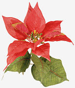 Poinsettia Leaf Posters - An Artificial Fake Poinsettia Plant Poster by Steve Wisbauer