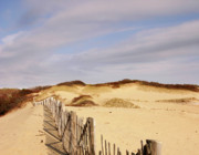 Scrub Brush Prints - An Autumn Afternoon in the Dunes Print by Michelle Wiarda