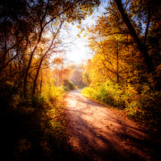Autumn. Fall Colors - An Autumn Invitation by Anthony Rego