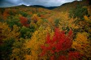 Autumn Foliage Prints - An Autumn View Print by Tim Laman