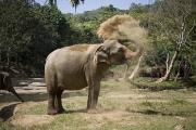 Pinnawela Photos - An Elephant Takes A Dust Bath by David Evans
