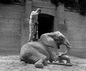 1920s Candid Art - An Elephant Trainer, And Jumebina by Everett