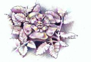 Cambridge Drawings - An English Rose by K M Pawelec