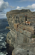 Inishmore Prints - An Irishman With His Dog Admire Print by Howell Walker