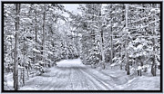 Blizzard Scenes Photo Posters - An Isolated Country Lane in a Frozen Winter Landscape with Snow-covered Pine and Cedar Trees Poster by Chantal PhotoPix