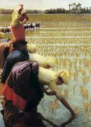 Female Worker Prints - An Italian Rice Field Print by Angelo Morbelli