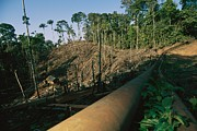 Industrial Concept Posters - An Oil Pipeline Running Through Amazon Poster by Steve Winter