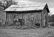 Shed Photo Prints - An Orderly World monochrome Print by Steve Harrington