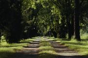 Dirt Roads Photos - An unpaved road by Anne Keiser