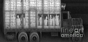 Smuggling Photo Prints - An X-ray Of A Truck With Illegal Print by Photo Researchers