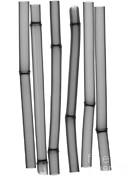 Ted Kinsman - An X-ray Of Bamboo