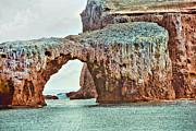 Sea Birds Posters - Anacapa Island s Arch Rock Poster by Cheryl Young