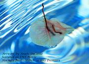 Anahi Decanio Image Licensed To Tnt Print by Anahi DeCanio
