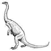 Cartoon Drawings - Anchisaurus - Dinosaur by Karl Addison