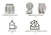 Distillation Posters - Ancient Arabic Apparatus Poster by Sheila Terry