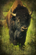 American Bison Prints - Ancient Bison Print by Iris Greenwell