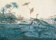Sea Birds Prints - Ancient Dorset Print by Henry Thomas De La Beche