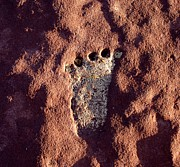 Chinle Prints - Ancient Footprint Print by Rick Repp