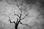 David Gordon - Ancient Oak Tree No. 3
