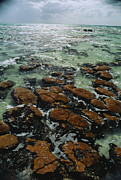 Entities Prints - Ancient Stromatolite Reefs Still Print by O. Louis Mazzatenta