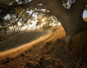 Dry Creek Photos - Ancient Sunset by Matt Tilghman