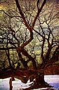Chris Lord - Ancient Winter Tree