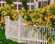 Climbing Roses Posters - And a picket fence... Poster by Grazyna Wolski