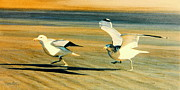 Sea Birds Prints - And Away We Go Print by Frank Dalton
