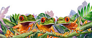 Brightly Colored Frogs Acrylic Prints - And Froggy Makes Three Acrylic Print by Shawn Shea