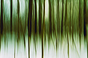 Tree Lines Prints - And Now for Something Completely Different  Print by Gert Lavsen
