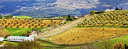 Southern Province Metal Prints - Andalusia Countryside Panorama Metal Print by Artur Bogacki
