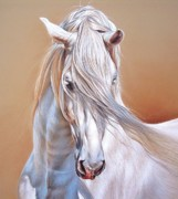 Equine Drawings - Andalusian - detail by Elena Kolotusha