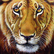 Wildlife Paintings - Andre Lion by Jurek Zamoyski