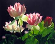 Lilly Pond Paintings - Andreas Lillies by Marina Petro