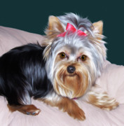 Yorkie Metal Prints - Andromeda Metal Print by Julie L Hoddinott