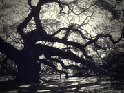 Angel Oak Posters - Angel Poster by Amy Tyler