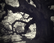 Angel Oak Posters - Angel II Poster by Amy Tyler