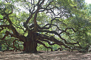 Live Oak Posters - Angel Oak II Poster by Suzanne Gaff
