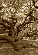Tree Limbs Posters - Angel Oak in Sepia Poster by Suzanne Gaff