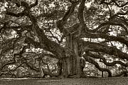 Angel Art - Angel Oak Live Oak Tree by Dustin K Ryan