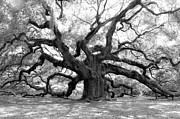 Angel Oak Photographs Framed Prints - Angel Oak  Framed Print by Sabrina  Hall