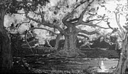 Landscape - Angel Oak by Stefan Duncan
