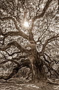 Amazing Posters - Angel Oak- Sun Beam  Poster by Drew Castelhano